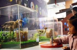 淇澳岛渔家科普馆 文化展示